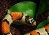 La reproduction des serpents - Blog de l'animalerie Zoomalia.com | PETS & ANIMAUX | Scoop.it