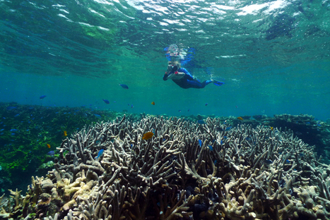 Calls for climate action as Great Barrier Reef suffers major coral loss   The Wild Planet   Scoop.it