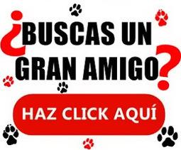 OSTEOLOGÍA ANIMAL   INTRODUCCIÓN A LA MORFOFISIOLOGÍA ANIMAL   Scoop.it