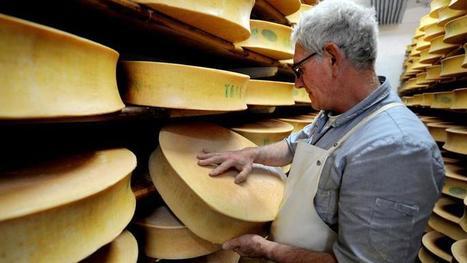 Le mystère des trous dans le fromage percé après un siècle de recherches   On n'arrête pas le progrès !   Scoop.it