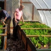Marianne Cufone is Working to End Food Insecurity with Growing Local NOLA Aquaponics Farm | Vertical Farm - Food Factory | Scoop.it