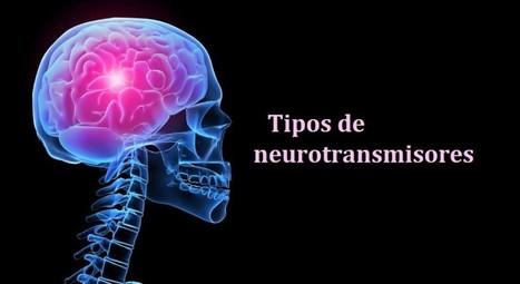Tipos de neurotransmisores: funciones y clasificación | INTELIGENCIA GLOBAL | Scoop.it