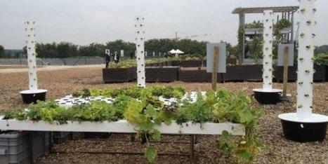 Quand une friche urbaine se mue en ferme | Agriculture urbaine et rooftop | Scoop.it