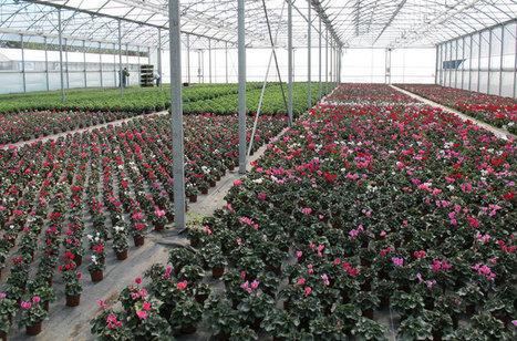 Végépolys : Lancement de l'appel à projets Végétal et PME | Production végétale | Scoop.it