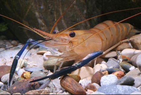 Les plus anciennes espèces du monde en déclin | EntomoNews | Scoop.it
