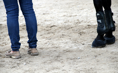 Millennial Grooms Are Ruining The Equestrian Industry | Fun with Horses | Scoop.it