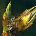 Propolis, l'un des trésors de la ruche - Observatoire des aliments | Abeilles, intoxications et informations | Scoop.it