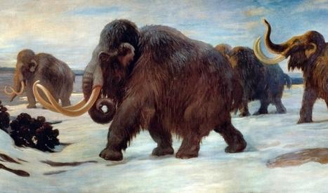 Le chien aidait-il l'homme préhistorique à chasser le mammouth ? | Aux origines | Scoop.it