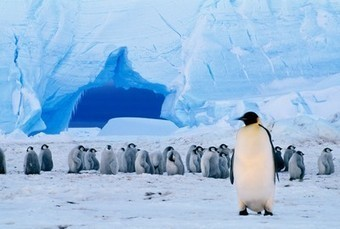 Nations to Designate #Antarctic Marine Protected Areas? - National Geographic   Rescue our Ocean's & it's species from Man's Pollution!   Scoop.it