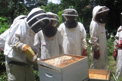 Abeilles: une nouvelle étude incrimine les pesticides | Toxique, soyons vigilant ! | Scoop.it