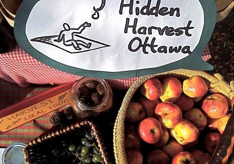 Hidden Harvest | What's Up? | Local Food | Scoop.it
