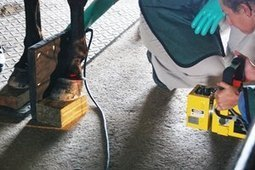 Hoof Angles' Impact on Lameness Examined   Equine Health Care   Scoop.it