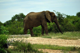 Kruger Park Sightings: On foot in the morning, by night a drive | Kruger & African Wildlife | Scoop.it