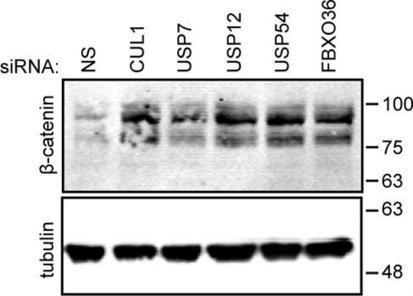Frontiers | Evaluation of putative TNF pathway elements in the control of the SCF-bTrCP complex. | Immunity | Scoop.it