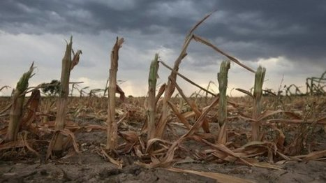 More pests 'resistant to GM crops'| France24 | CALS in the News | Scoop.it