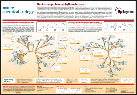 Chromatin Remodeling Enzymes: The Human Protein Methyltransferases | Amazing Science | Scoop.it