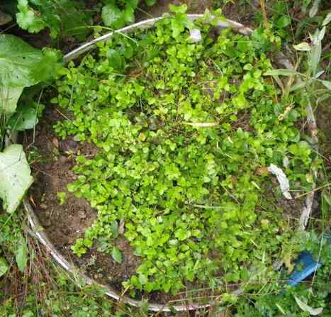 Oregano? You Can Grow That!   Your Small Kitchen Garden   Annie Haven   Haven Brand   Scoop.it