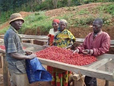 Le café, moteur de développement local au Burundi | Commerce équitable et durable | Scoop.it
