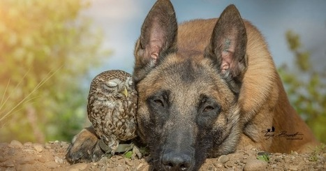 Meet Ingo and Poldi: Tiny rescued owl and dog are madly in love | Food for Pets | Scoop.it