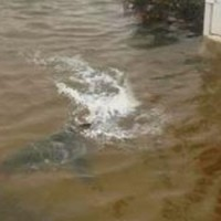 Shark Found In Front Yard As Hurricane Sandy Floods New Jersey | Climate Chaos News | Scoop.it