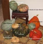 Winter Squash: Easy to Grow and Good for You | School Gardening Resources | Scoop.it