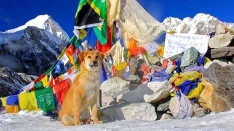 Rupee, el perro que conquistó internet a través del Everest. Desnivel | Randonnée et de l'escalade. | Scoop.it