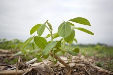 Monsanto se lance dans le biocontrôle   Agroalimentaire   Biocontrole   Scoop.it