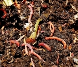 A guide to organic composting | Nana Silvergrim | tropical vegetables | Scoop.it