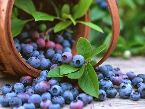 Body Enhancement: Reduce Body Fat Deliciously With Blueberries | Business | Scoop.it