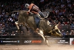 America's Fastest Growing Sport: Professional Bull Riding | Articles | Scoop.it