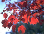 Autumn Colors in Missouri | The Miracle of Fall | Scoop.it