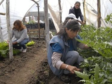 3000 personas ya no gastan en el mercado | Cultivos Hidropónicos | Scoop.it