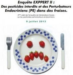 Des pesticides interdits et des Perturbateurs Endocriniens (PE) dans des fraises. | Toxique, soyons vigilant ! | Scoop.it