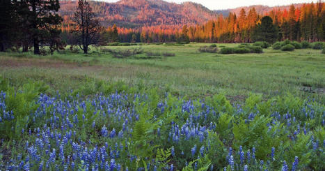 Yosemite National Park in California adding 400 acres of meadow, forest | Authentic Yosemite | Scoop.it