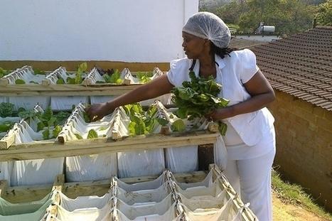 Umgibe : cultiver des légumes dans des sacs suspendus pour nourrir les townships | Afrique: développement durable et environnement | Scoop.it