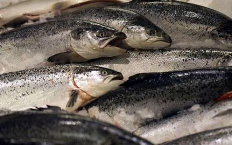 Alimentation : le poisson, ce n'est pas si bon ! | Toxique, soyons vigilant ! | Scoop.it