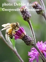 Register Now for Honeybee Nutrition Workshop: Growing Small Farms: Enhancing Sustainability Workshops | Research from the NC Agricultural Research Service | Scoop.it