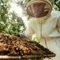Les insecticides tueurs d'abeilles vont-ils être enfin interdits ? | Nous avons besoin des abeilles | Scoop.it