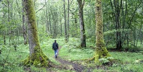 Baños de bosque para desconectar de la vida poco saludable | Apasionadas por la salud y lo natural | Scoop.it