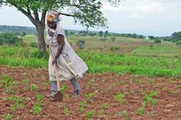 La sécheresse renverse les prévisions au Swaziland - IRINnews.org | Diprofav cooperative agricole | Scoop.it