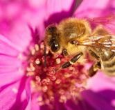 Comprendre les abeilles avec... une ruche high-tech ! - | Aie Tek | Scoop.it