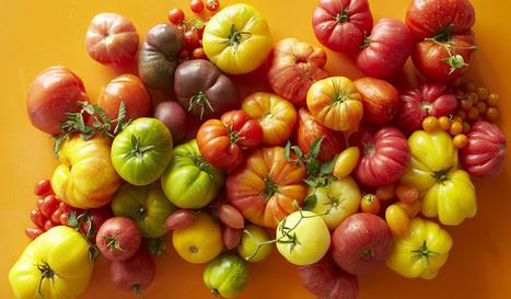 100% tomato electricity | Economie circulaire | Scoop.it