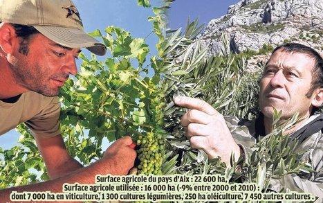L'agriculture en pays d'Aix cultive sa diversification | Les colocs du jardin | Scoop.it