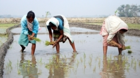 Crops That Grow in Salty Water [Video]   critical reasoning   Scoop.it