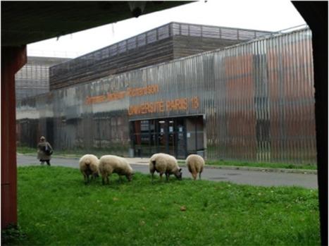 Les « Bergers Urbains », bien plus que des bergers… has been ou visionnaires ? - Demain La Ville - Bouygues Immobilier | Société | Scoop.it