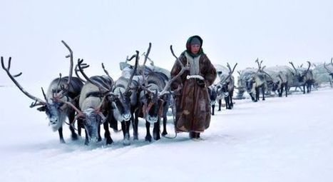 Transhumance des rennes en Suède   les-meilleurs-exemples-de-projets-et-campagnes-etourisme   Scoop.it