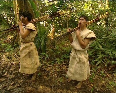 Chimane, le peuple de l'arbre | arts premiers | Scoop.it