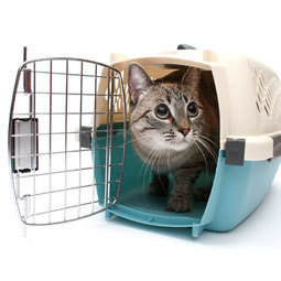 Train Your Cat to Ride in a Cat Carrier | Pet News | Scoop.it