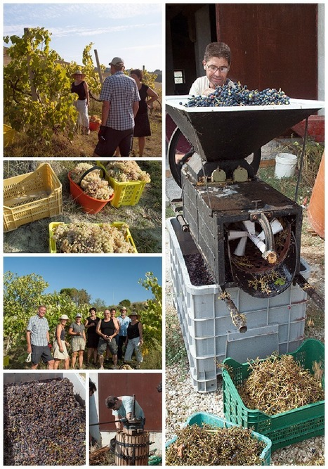 Grape Harvest and Starting to Make Wine | Wines and People | Scoop.it