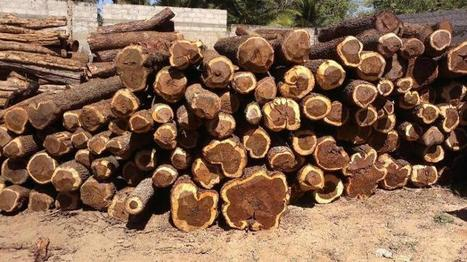 Kefri makes headway in averting sandalwood extinction | GarryRogers NatCon News | Scoop.it